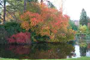 Trees and shrubs for Autumn colour