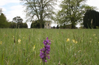 Orchids and other wild flowers in the park of a local chateau